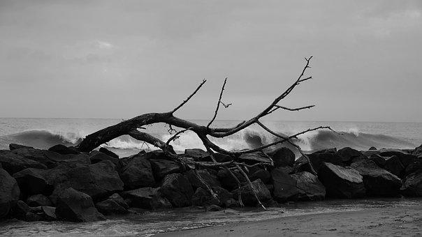 Tree, Winter, Autumn, Nature, Dry, Sea, Onda, Clouds