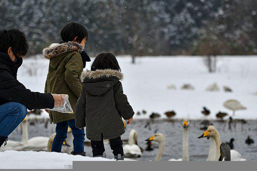 People, Parent Child, Background, Bird, Swan, Seasonal