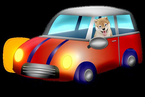 Car, Dog, Mini Cooper, Lights, Headlights, Driving, Pet
