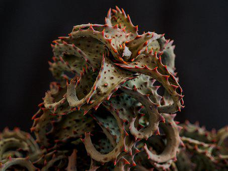 Aloe, Plant, The Flesh, Spines, Prickly, Flora, Room