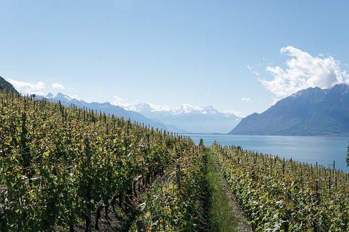 Wine, Wine Glasses, Vino, Happy, Winery, Switzerland