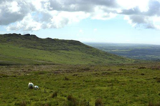 Hills, Sheep, Nature, Lamb, Landscape, Meadow, Green