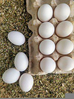 Huevos, Huevos De Gallina, Alimentos, Huevos De Pascuas