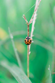 Ladybug, Green, Nature, Insect, Bug, Beetle, Creation