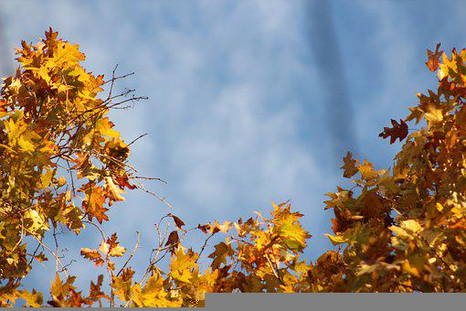 Nature, Yellow, Sky, Leaves