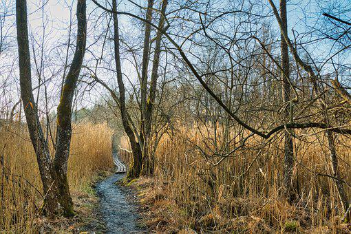 Trail, Reed, Forest, Grass, Trees, Path, Nature Trail