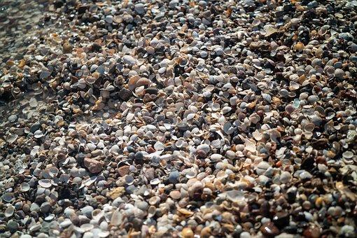 Seashells, Shells, Beach, Shell