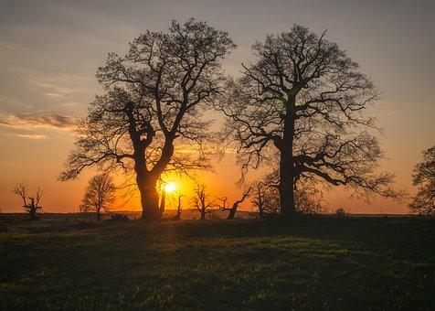 Tree, Spring, Sunset, Two Trees, Oak, Oaks, The Sun