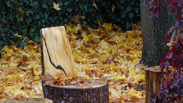 Autumn, Leaves, Tree, Stool, Wood, Yellow, Wet
