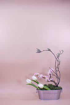 Blossom, Botanical, Branch, Close-up, Contemporary