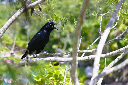 Crow, Bird, Branch, Perched, Animal, Wildlife, Feathers
