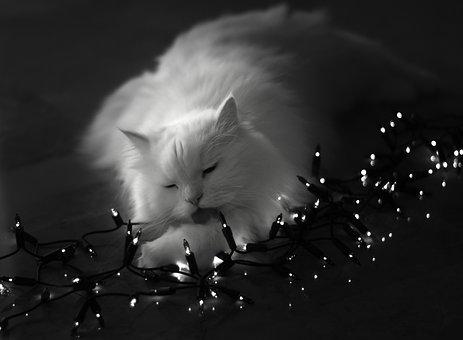 Cat, Pet, Garland Lights, Persian Cat, White Cat