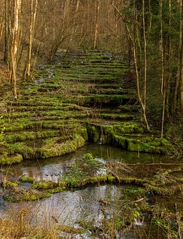 Sinter Terraces, River, Moss, Bach, Stream, Creek