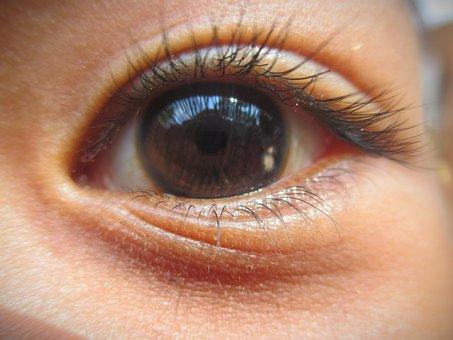 Human, Eyeballs, Eyebrows