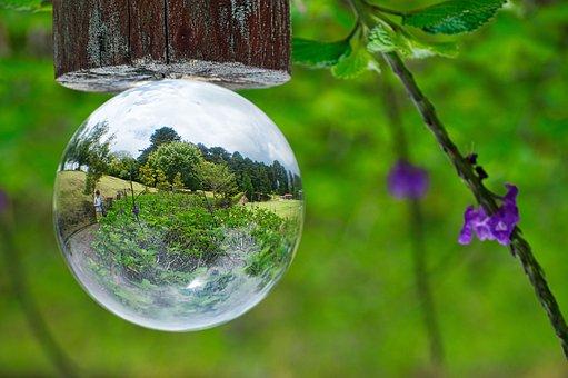 Lensball, Reflection, Nature, Landscape, Plants, Park