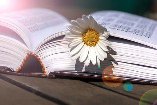 Book, Thorah, In Lights, Jewish, Hebrew, Open, Shalom