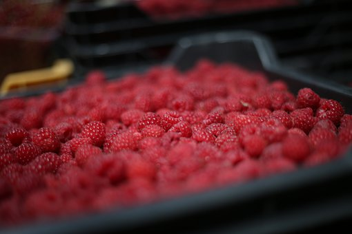 Raspberries, Red, Berries, Fresh, Fruits, Harvest