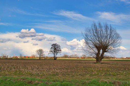 Field, Trees, Graze, Rural, Meadow, Farm, Agriculture