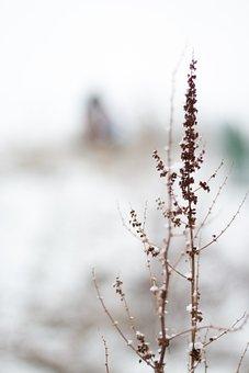 Nature, Snow, Flower, Brown, White, Background