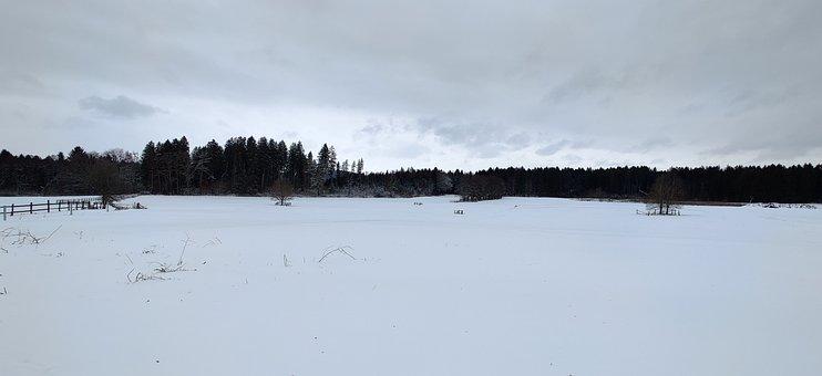 Winter, Snow, Field, Trees, Snowy, Wintry, Landscape