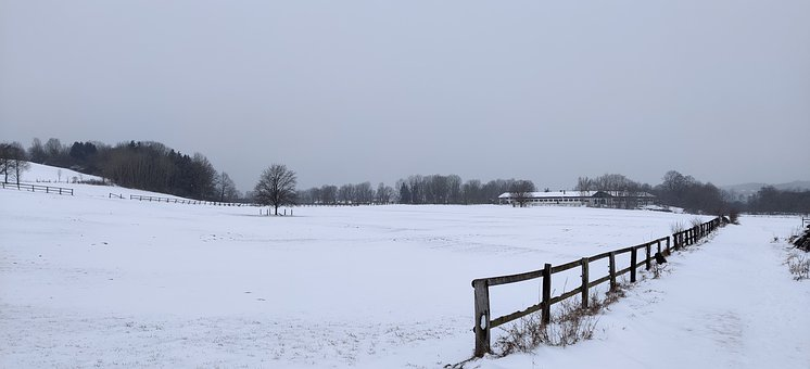 Winter, Snow, Field, Fence, Wooden Fence, Trees, Snowy