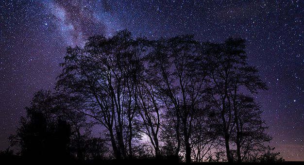 Trees, Stars, Night, Silhouette, Night Sky, Starry