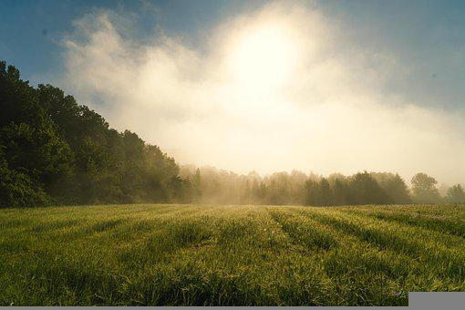 Field, Fog, Sunlight, Trees, Grass, Meadow, Landscape