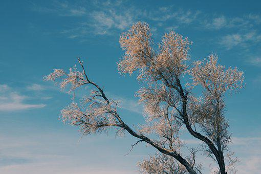 Tree, Branches, Sky, Leaves, Foliage, Nature