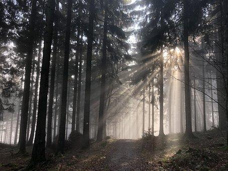 Forest, Fog, Sunlight, Silhouette, Mist, Trees, Woods
