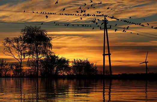 Sunset, Birds, Lake, Silhouette, Reflection, Water