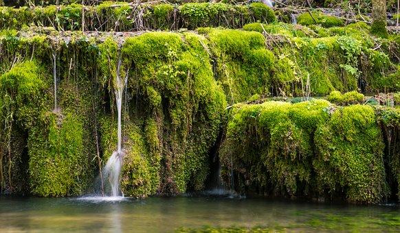 Waterfall, Moss, Bach, Water, Forest, Drip, Splash