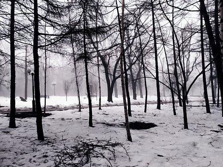 Trees, Park, Snow, Ice, Trail, Winter, The Park, Dark