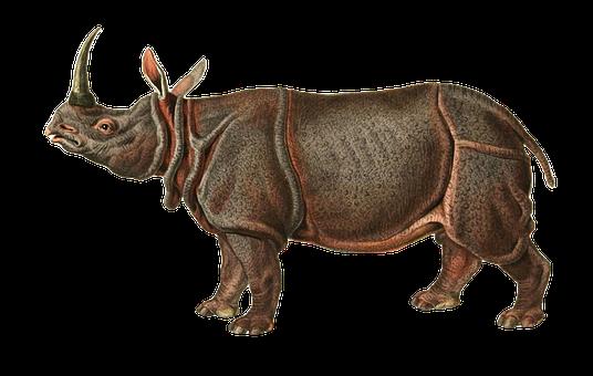 Indian Rhinoceros, Rhinoceros, Animal, Rhino, Pachyderm