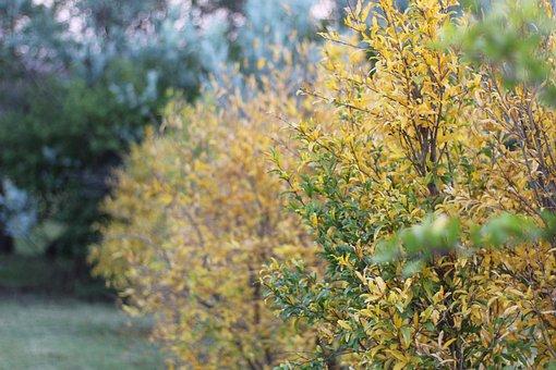 Autumn, Seasons, Change Of Season, Fall, Leaves, Nature