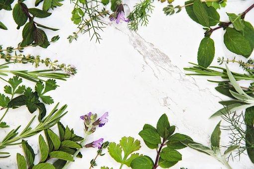 Herbs, Background, Sage, Mint, Cilantro, Peppermint