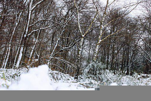Snow, Winter, Tree, Landscape, Nature, Trees, Cold