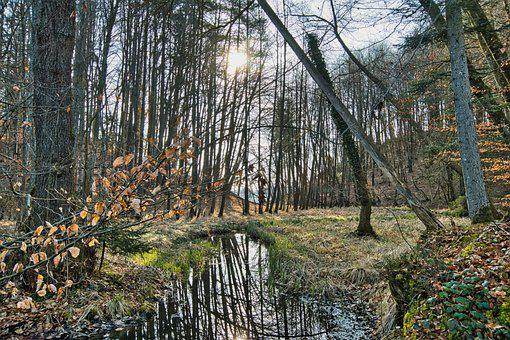 Forest, Trees, Stream, Creek, Bach, Reflection, Water