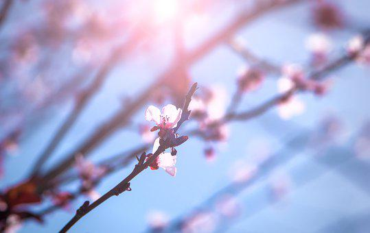 April, Spring, Flowers, Blossom, Flowering, Colorful