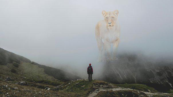 Fantasy, Lion, Hiking, Man, Fog, Mountain, Danger