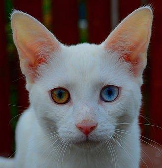 Cat, Feline, Kitten, Portrait, White, Fur, Mammal