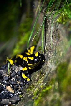 Lizard, Animal, Nature