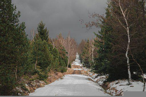 Road, Trees, Snow, Path, Winter, Woods, Forest
