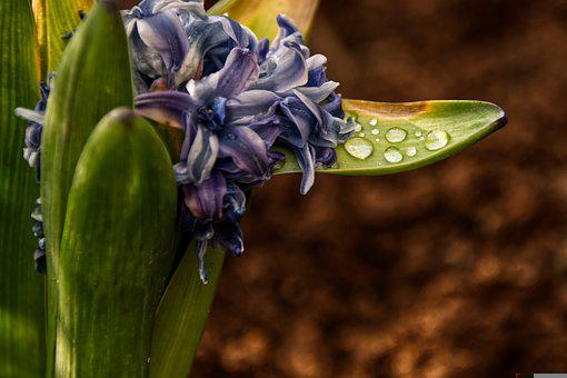 Easter, Flower, Plant, Water, Drop Of Water, Nature