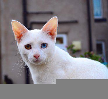 Cat, Kitten, Portrait, Cat Portrait, White, Fur, Feline