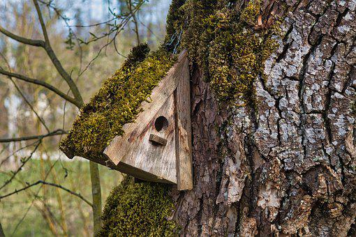 Birdhouse, Tree, Moss, Trunk, Bark, Wood