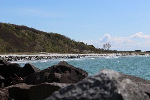 Coast, Swan, Nature, Water, Sea, Bird, Beach, Animal