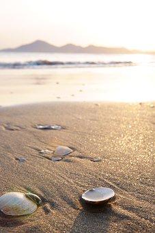 Sand, Shells, Beach, Sea, Waves, Sunset, Clam