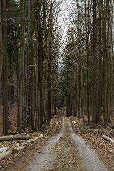 Path, Forest, Trees, Nature, Woods, Woodlands, Trail