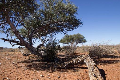 Trees, Landscape, Desert, Arid, Africa, Namibia, Travel