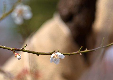 Apple, Flower, Branch, White Flower, Petals, Bud, Bloom